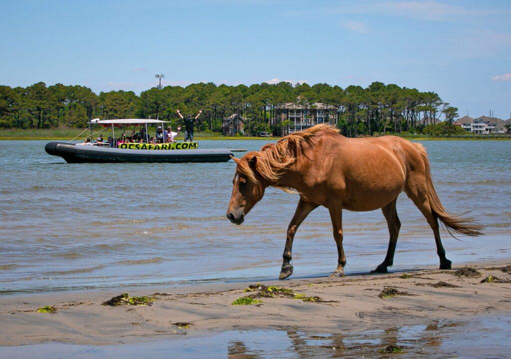 west oc marina horse