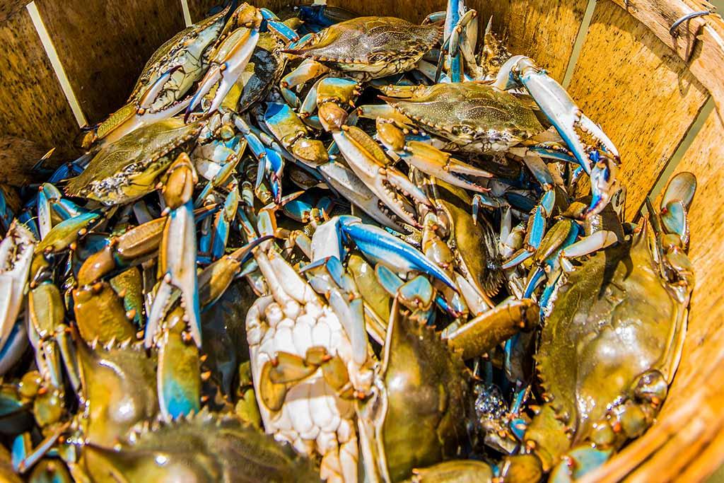 bushel of crabs