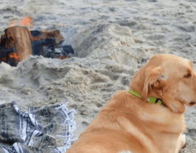 Family Bonfire on the Beach
